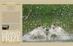 2010 Grand Prize NBP magazine spread