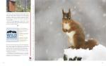 Peter Cairns Portfolio Page 6
